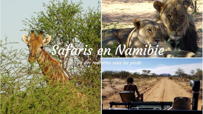 Safaris en Namibie, les réserves privées du centre, road trip 5