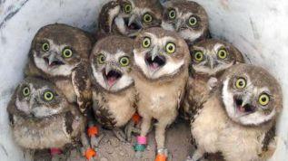 HT_superb_owls_1_sk_150211_16x9_992