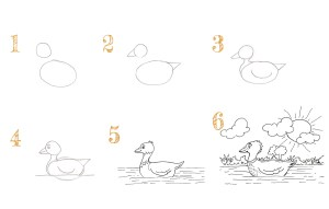 Read more about the article Comment dessiner un canard sur l'eau
