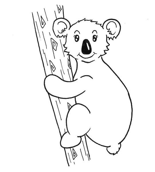 encrage du dessin de koala femelle