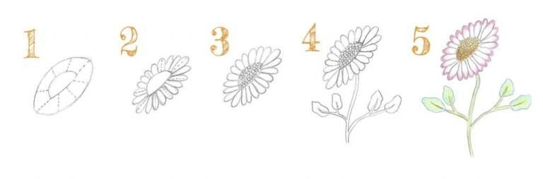 Les 5 étapes pour dessiner une pâquerette de profil