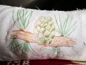 dessin nature cone de mélèze