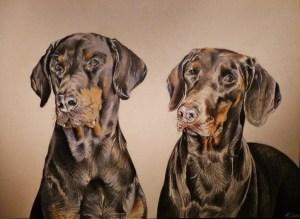 Portrait d'animaux : dessin d'après photo de chiens dobermann