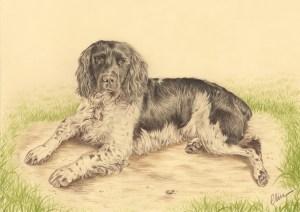 Portrait dessin d'après photo d'un chien épagneul breton sur fond de prairie