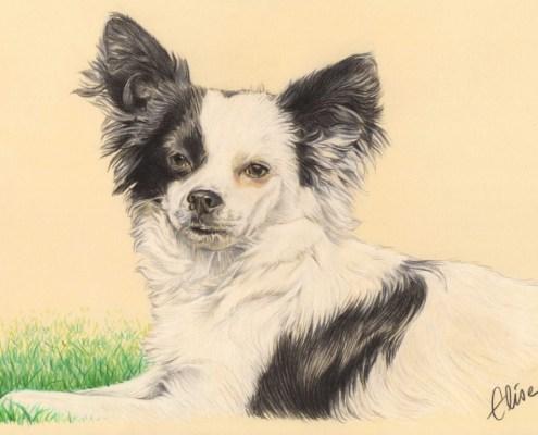 Portrait dessin d'après photo d'un chien croisé épagneul papillon