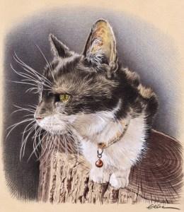 Portrait dessin d'un chat noir et blanc