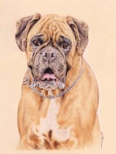 Portrait dessin d'après photo d'un chien boxer