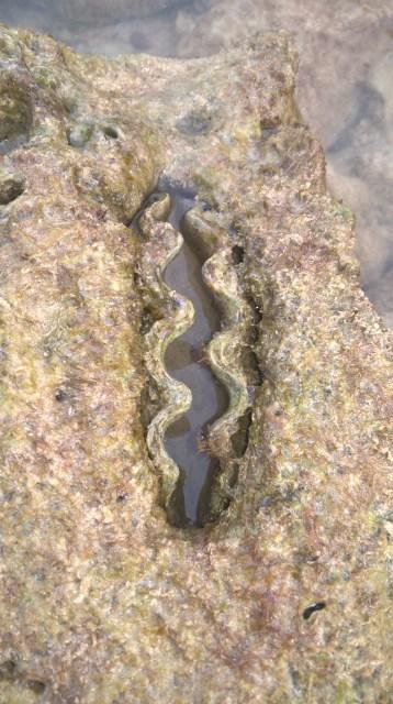 Sea creature phi phi island 1