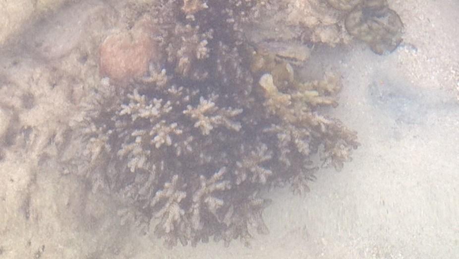Sea creature phi phi island 4