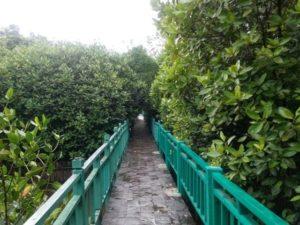 Kawasan Eko Wisata Mangrove