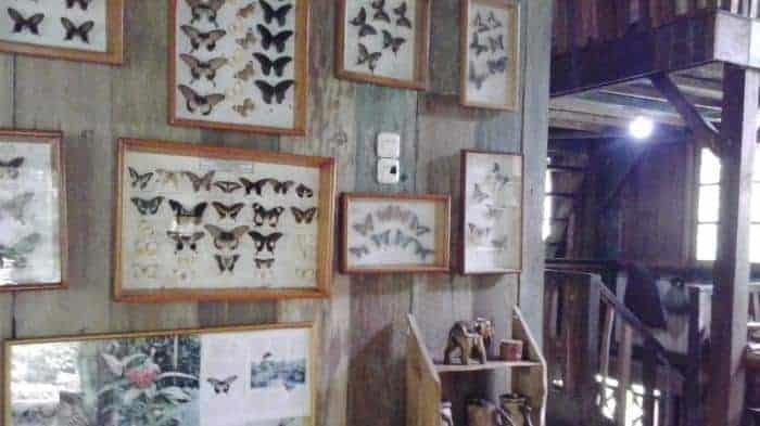Taman Kupu-Kupu Gita Persada Lampung