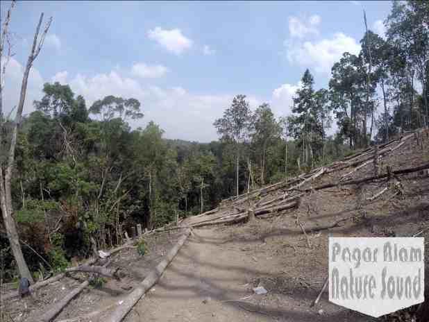 Perjalanan menuju Curup Maung