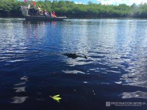 Da ist er, der erste gesichtete Alligator lockt gleich mehrere Boote an