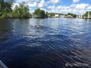 Am Ende der Tour taucht noch eine Delfin Familie auf