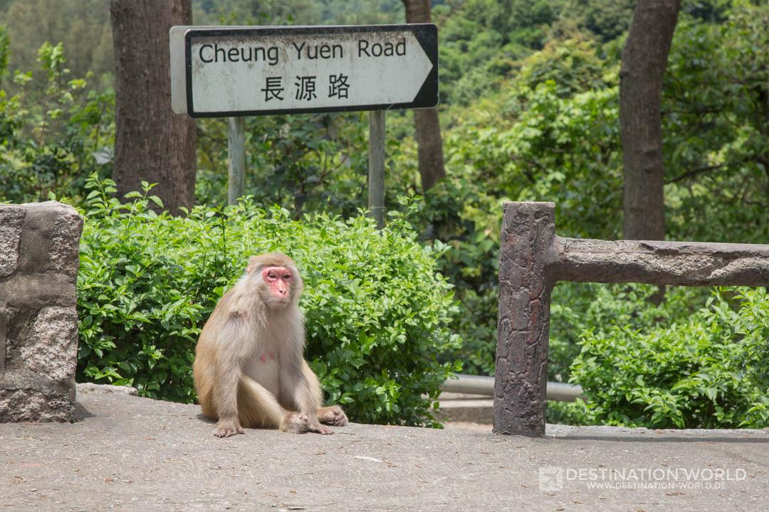 Affe vor einem Straßenschild in Hong Kong