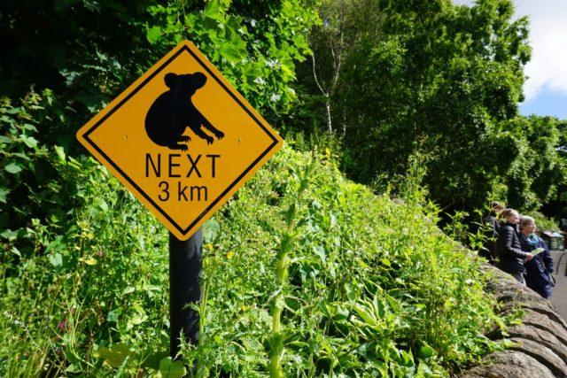 Koala next 3 km
