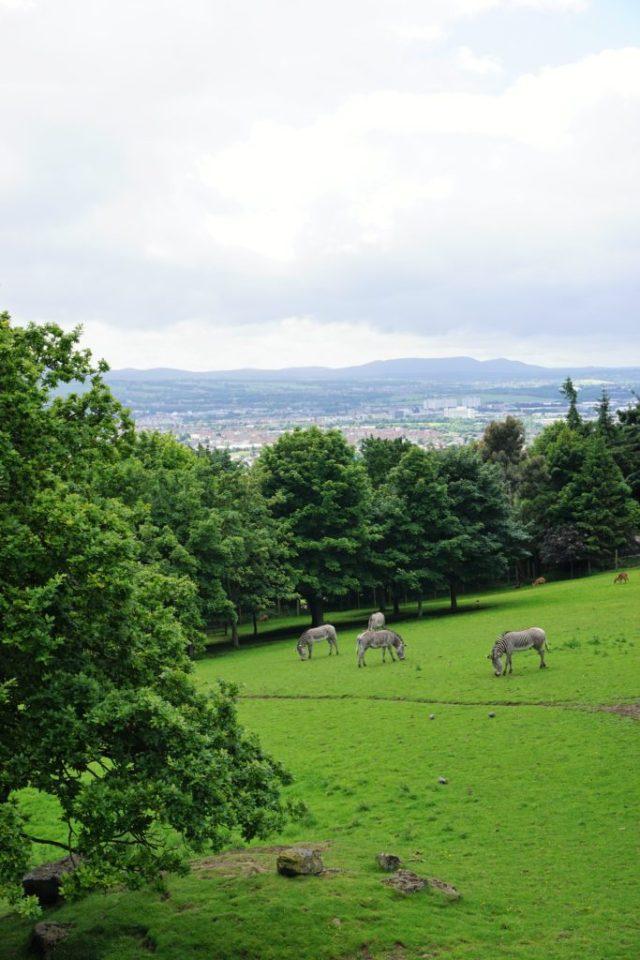 View and Zebras in Edinburgh Zoo