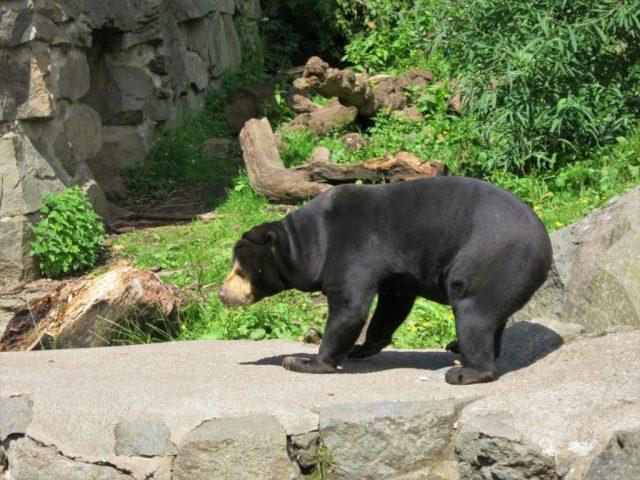 Bear Edinburgh Zoo