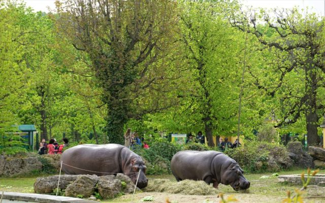 Tiergarten Schönbrunn Zoo Vienna Wien