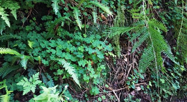 Vandre Nordirland Glenariff Forest Park