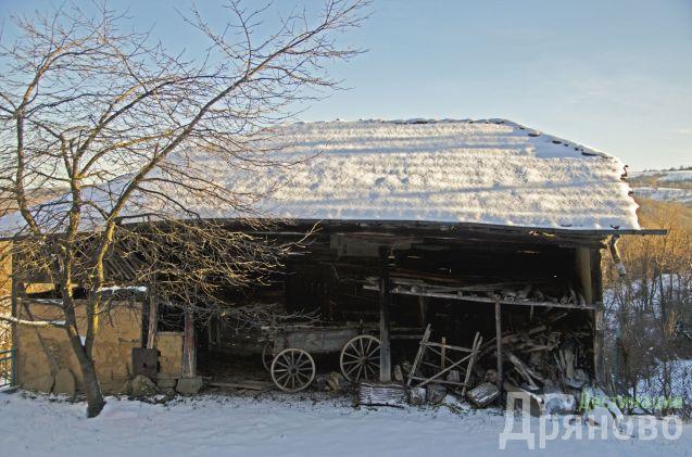 Село Бучуковци - сайвант