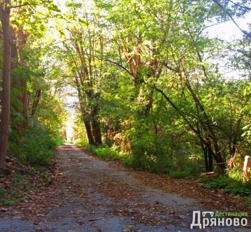 Долни Драгойча - път 4