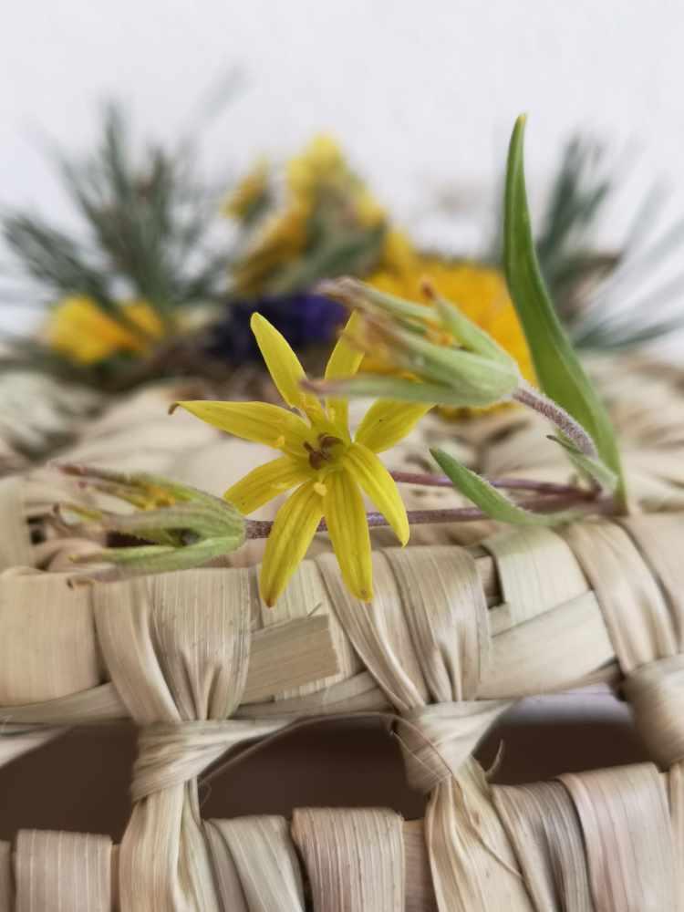 Fleurs des Alpes-Gagée de Liotard