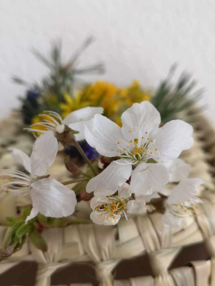 Fleurs des Alpes-Merisier
