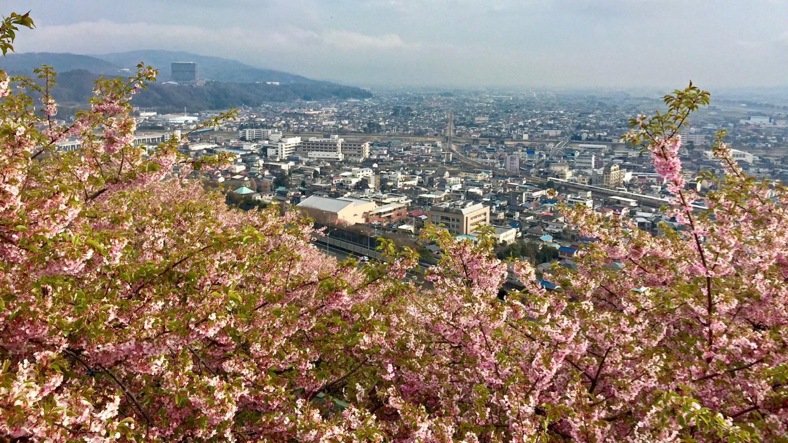 View on Matsuda from the hill Matsudayama covered with cherries