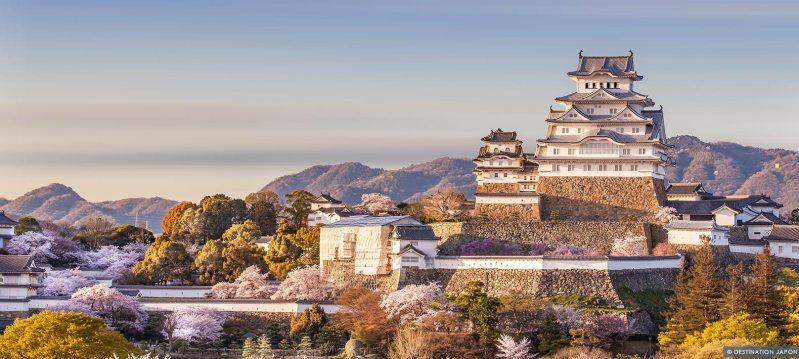 Château de Himeji entouré de cerisiers