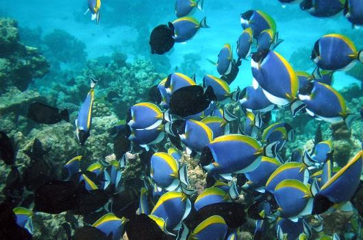 Zanzibar_Diving_Misali_Coral_Garden