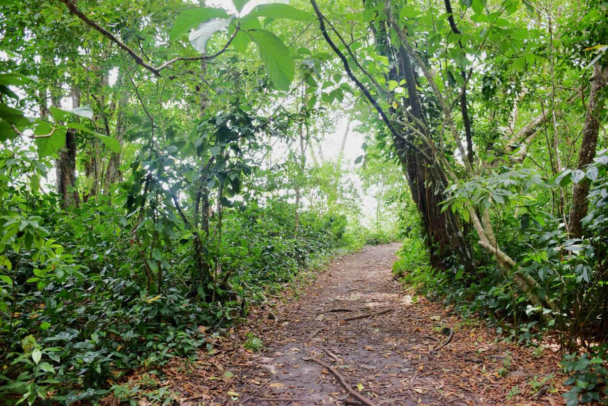 A path in Cahuita National Park