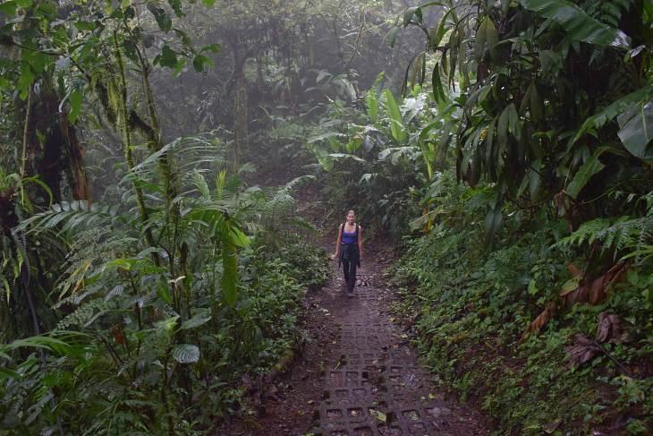 Visit the monteverde cloud forest