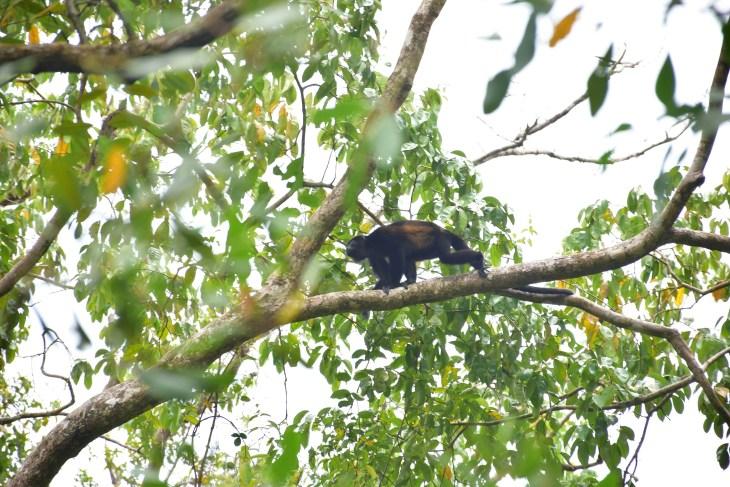 cahuita national park wildlife