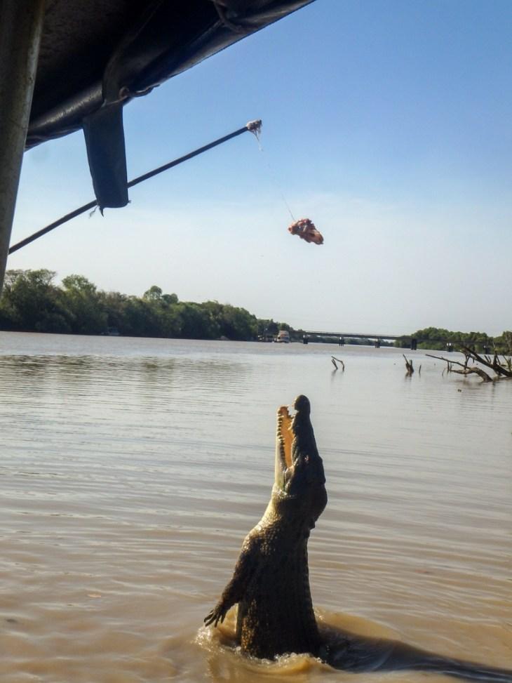 Jumping croc cruise darwin