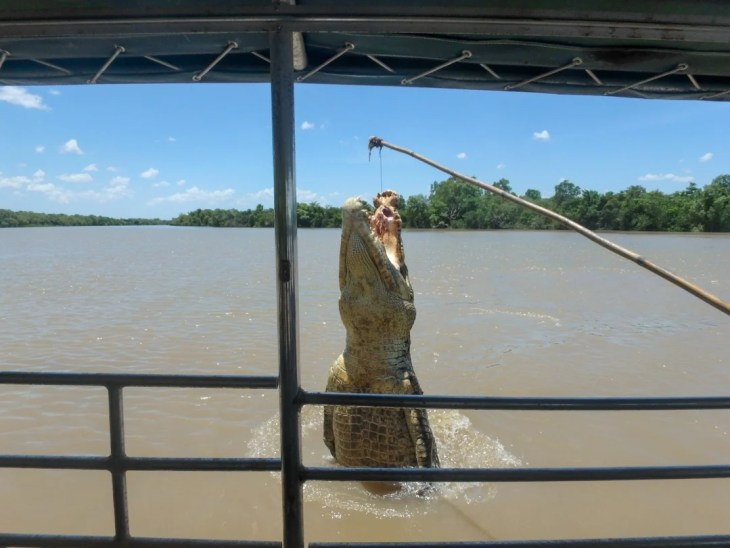 Adelaide River Jumping crocs Darwin
