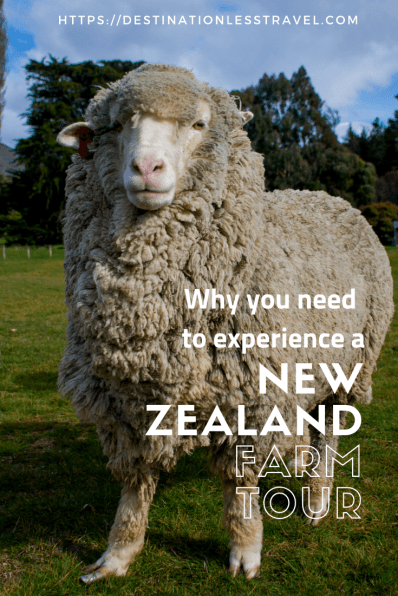 new zealand farm tour pinterest