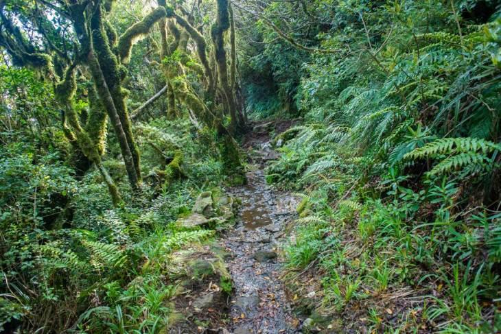 The trail to the pouakai hut in Taranaki