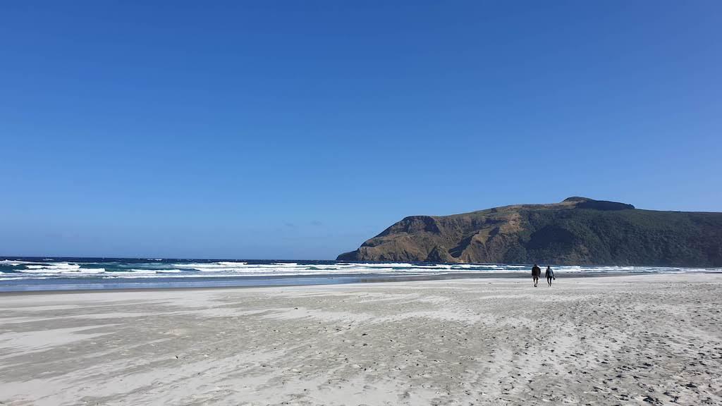 Allans Beach Péninsule d'Otago