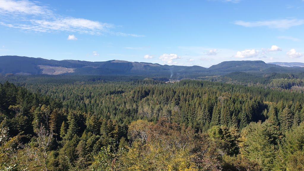 Redwoods Whakarewarewa Forest