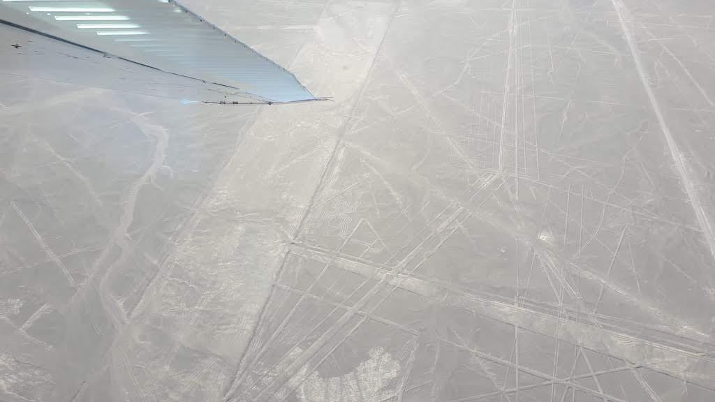 araignée Nazca