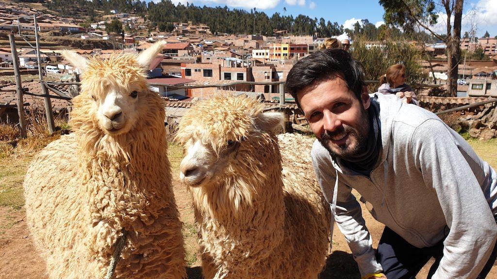 Coopérative de laine d'alpaga