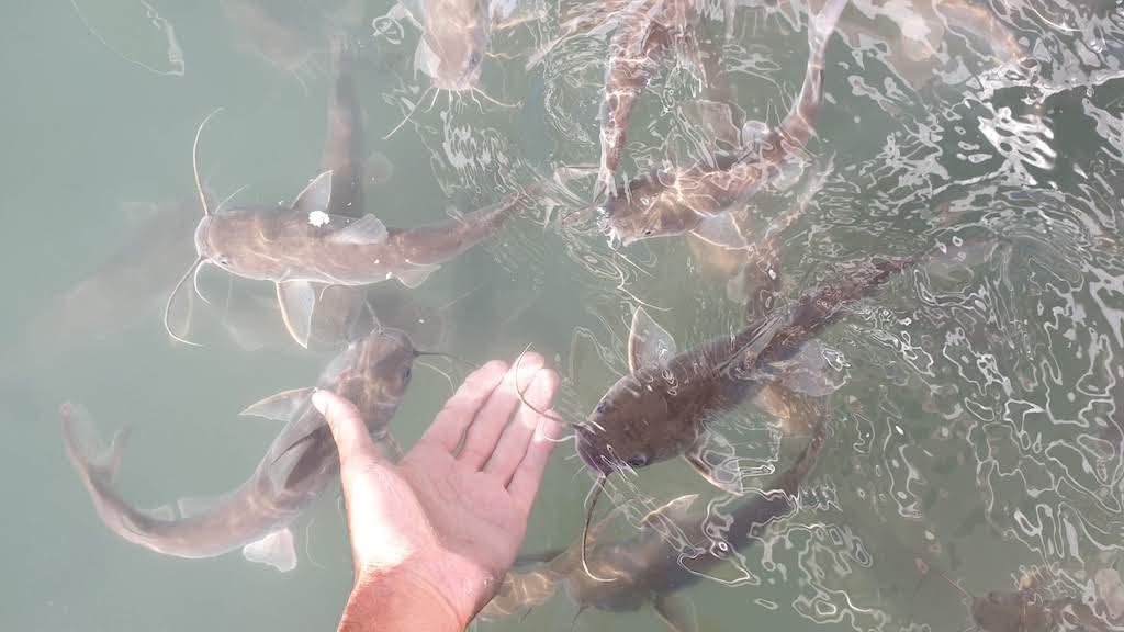 poissons Passeio de Barco Solemio