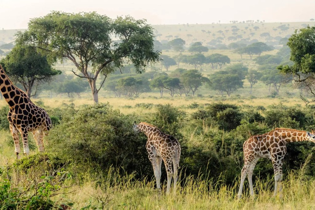 Murchison Falls National Park Landscape one of the top destinations in Uganda