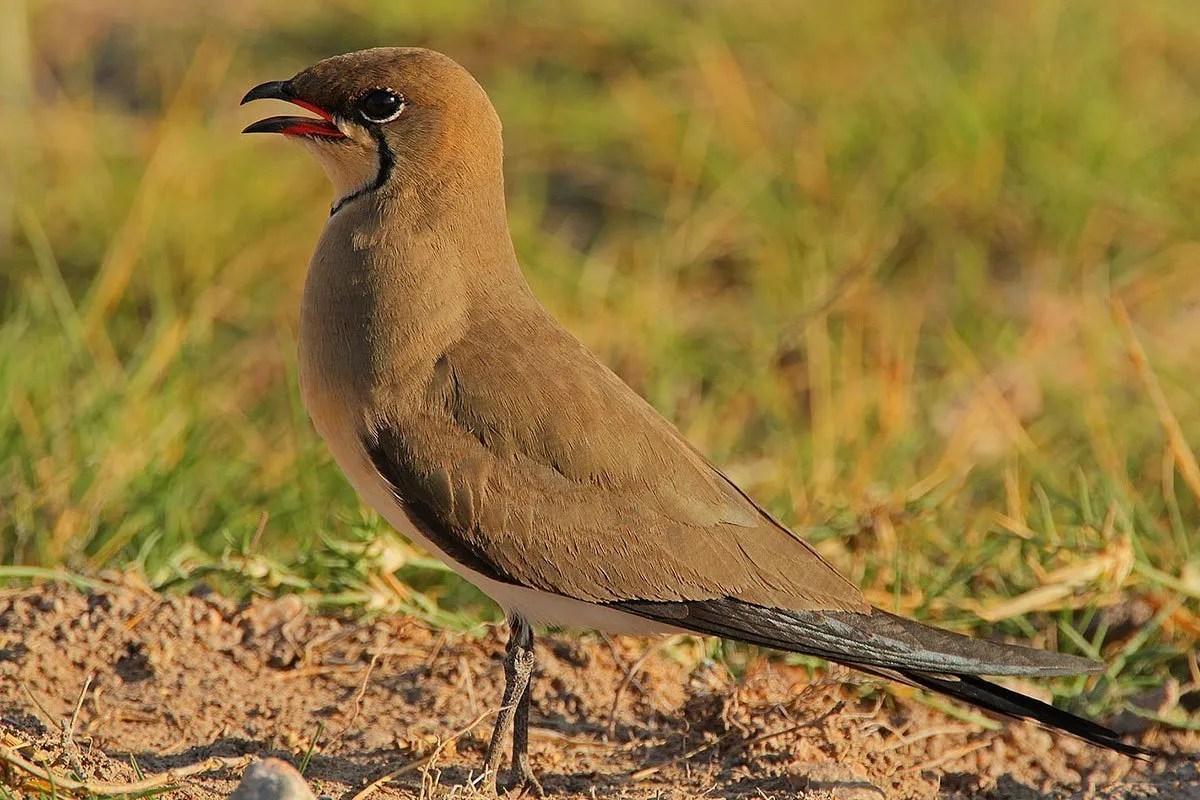Queen Elizabeth National Park Birding