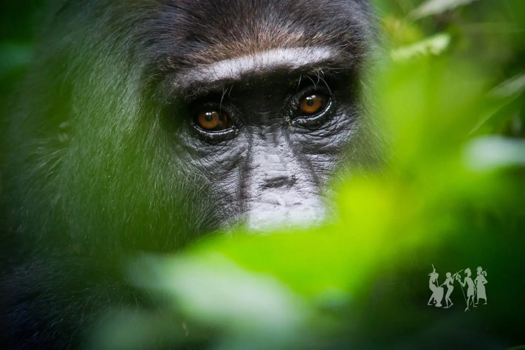 What to pack for gorilla tour in Uganda