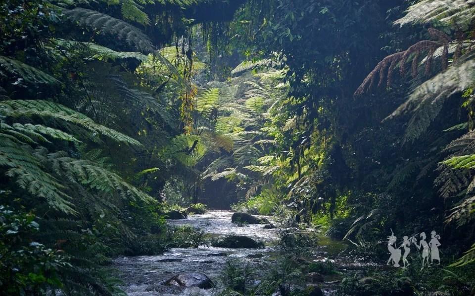 Bwindi Impenetrable Forest jungle