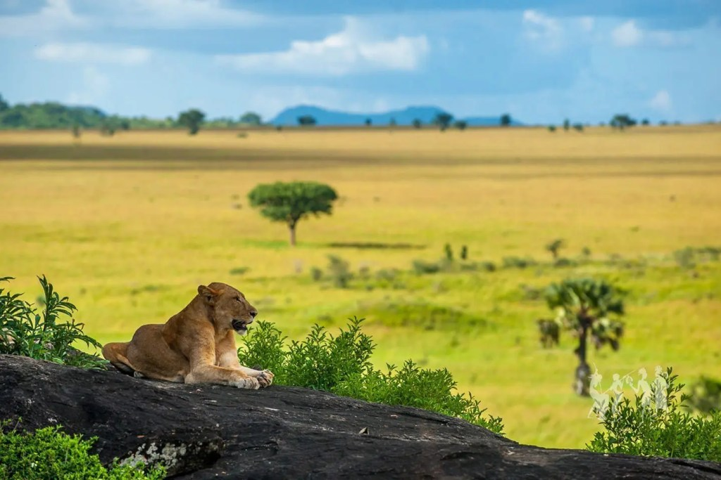 Kidepo Valley National Park, the most remote of all the top destinations in Uganda