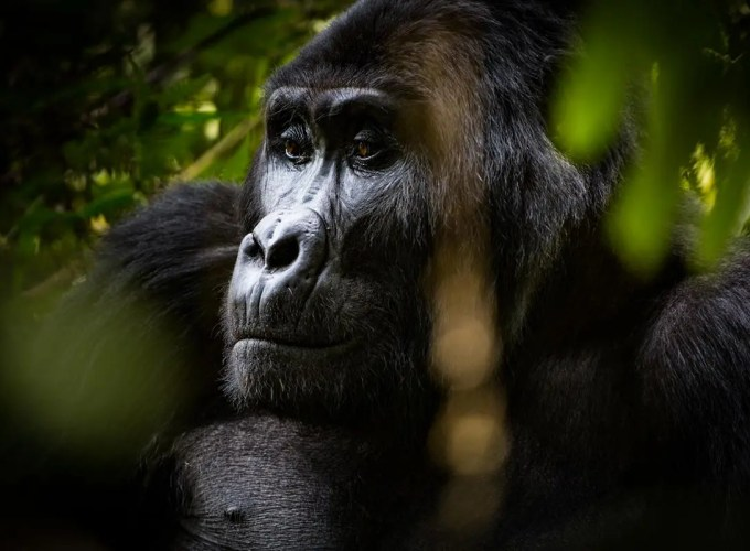 Africa safari Trips, Vacations & Gorilla Tours to Uganda and beyond!