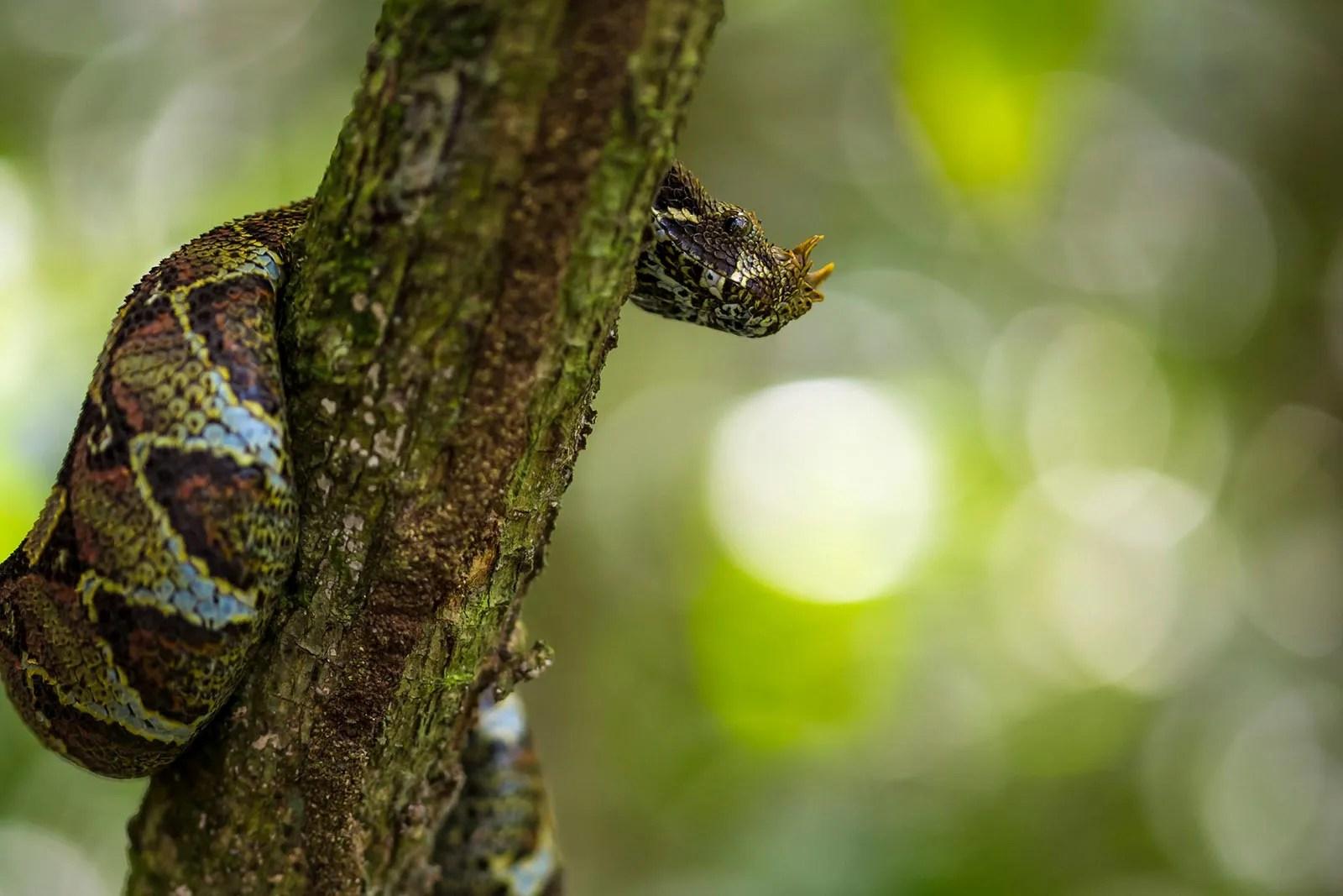 Snakes most dangerous animals in Uganda